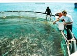 Planning on development of marine fish farming to 2015, and vision 2020