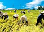 Chiến lược phát triển nông nghiệp, nông thôn giai đoạn 2011-2020