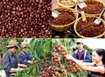 The development planning for Vietnam's coffee sector to 2020 and vision to 2030