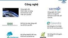 Công nghệ viễn thám nâng cao độ chính xác theo dõi lúa và bảo hiểm cây trồng tại Việt Nam