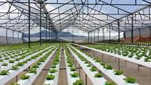 Hỗ trợ 100 nghìn tỷ đồng cho nông nghiệp công nghệ cao