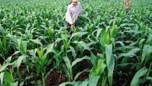 bản tin nông nghiệp