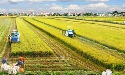 Chuyên gia WB: Nông nghiệp Việt giảm tăng trưởng vì đứng ở ngã ba đường