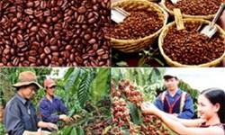 Quy hoạch phát triển ngành cà phê Việt Nam đến năm 2020 và tầm nhìn đến năm 2030