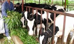 Chiến lược phát triển chăn nuôi đến năm 2020