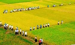 Quy hoạch tổng thể phát triển ngành nông nghiệp cả nước đến năm 2020 và tầm nhìn đến 2030