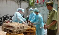 Năm nhóm giải pháp trọng tâm phòng chống dịch cúm A/H7N9 trên gia cầm và người