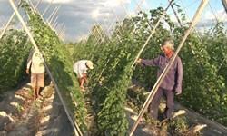 Quy hoạch chuyển đổi cơ cấu cây trồng trên đất lúa giai đoạn 2014-2020