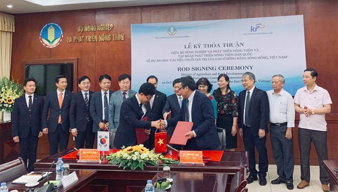 Korea supports Vietnam to improve the rice value chain in the Red River Delta