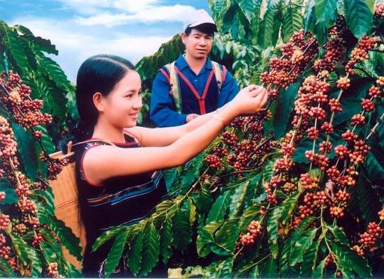 Quy hoạch chuyển đổi cơ cấu sản xuất nông lâm nghiệp, thủy sản vùng Tây Nguyên đến năm 2010 và định hướng 2020